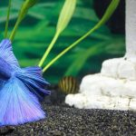 Best Betta Fish Foods