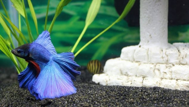 best betta fish food