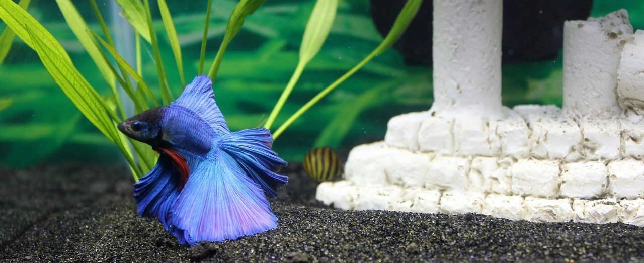 Best betta fish foods to keep your betta healthy 2018 for Food for betta fish