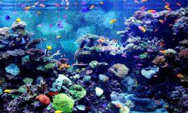 10 gallon fish tanks and 12 gallon fish tanks