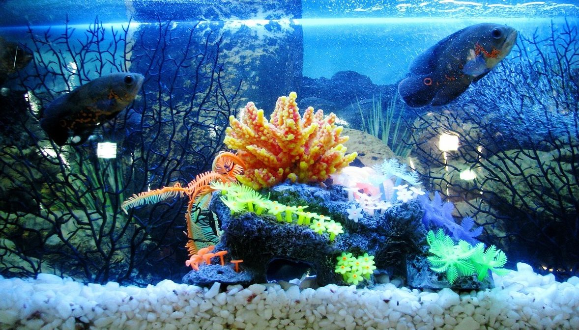 Fish tank setup guide everything you need to know from for 10 gallon koi tank