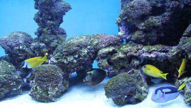 saltwater fish food