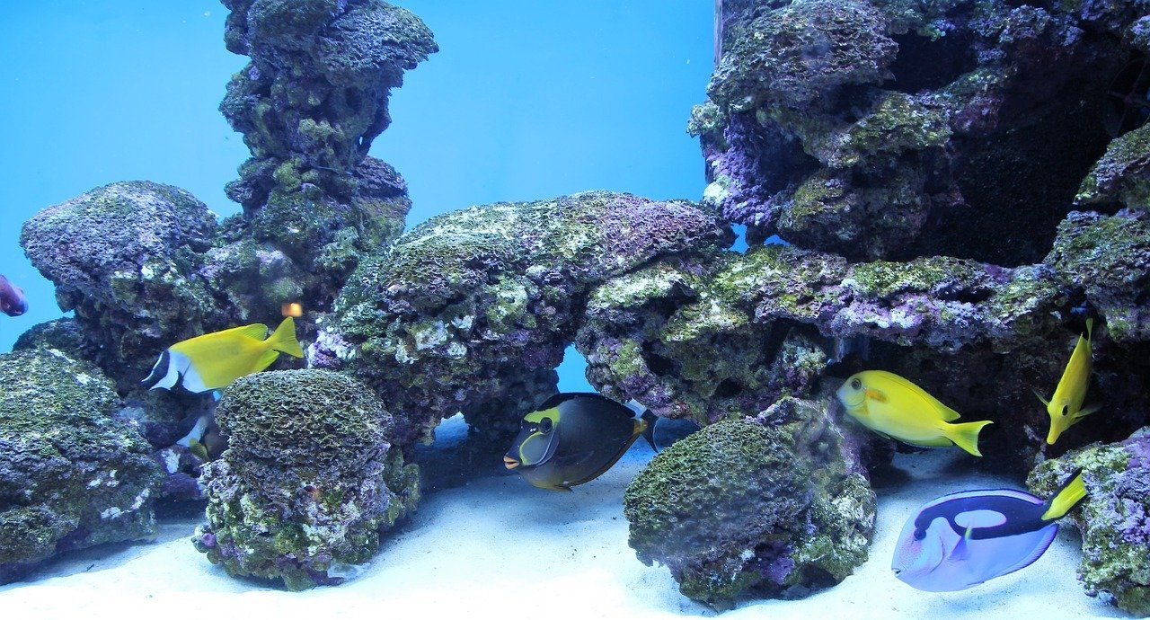 Keep Your Saltwater Fish Happy Amp Healthy With The Right