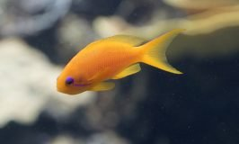 best 3 gallon fish tanks