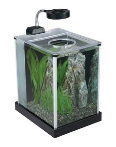 fluval spec desktop glass aquarium