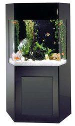 aquacustom 50 gallon shadow box aquarium