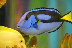 best 30 gallon fish tanks