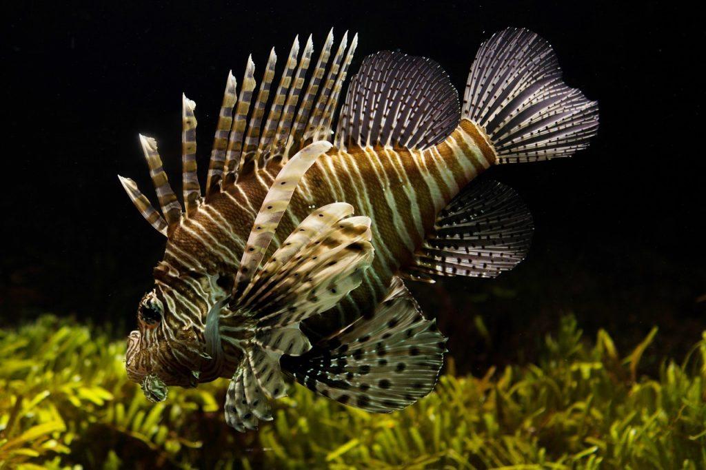 best 50 gallon fish tanks