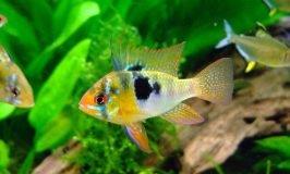 best freshwater aquarium test kits