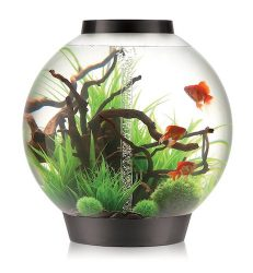 biorb classic aquarium with led light