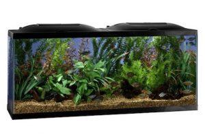 marineland biowheel 55 gallon aquarium kit