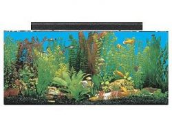 seaclear 30 gallon show acrylic aquarium combo set