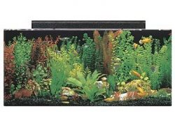 seaclear 40 gallon acrylic aquarium kit 2