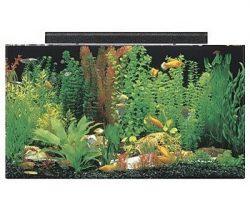 seaclear 50 gallon acrylic aquarium combo set