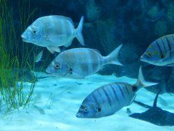 75 gallon fish tank