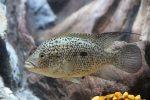 Best Fish Tank & Aquarium Internal Filters