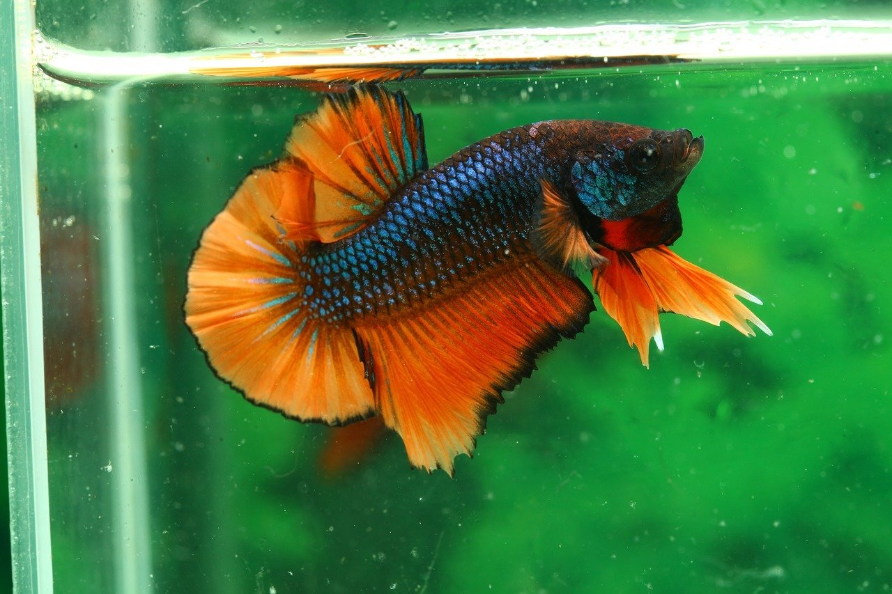 Best betta water conditioner 2018 buyer 39 s guide and reviews for Best water for betta fish