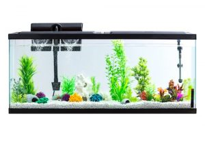 aqua culture 55 gallon aquarium starter kit