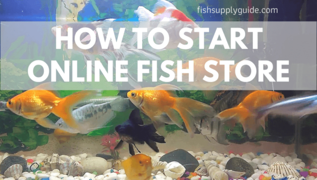 how to start a fish ecommerce online store